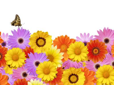 Guerilla Gärtner Blumenlandschaft